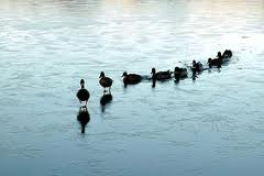 Getting all your ducks in a row
